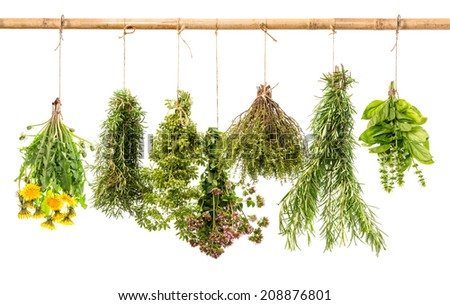 fresh healthy herbs hanging isolated on white background. rosemary, basil, thyme, oregano, marjoram, dandelion - stock photo
