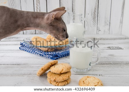 fresh healthy milk and cookies with cat