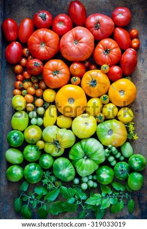 Fresh heirloom tomatoes background, organic produce at a Farmer's market. Tomatoes rainbow. - stock photo