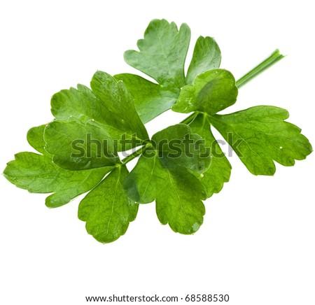 fresh herb parsley isolated on white - stock photo