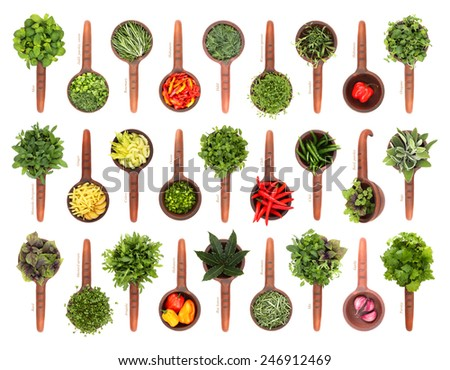 Fresh herbs and spices collection isolated on white background. In rustic, ceramic scoop - stock photo
