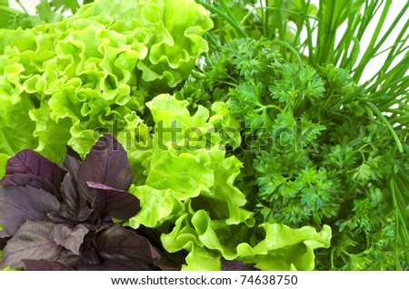 Fresh herbs: basil, lettuce, parsley and green onion close-up on white  background - stock photo