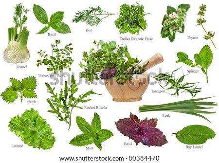 Fresh herbs collection set close up  isolated on white background - stock photo