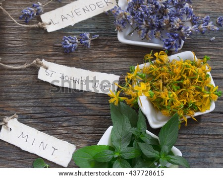 fresh herbs cosmetics, St John;s wort, mint and lavender - stock photo