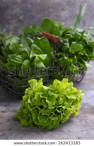 fresh herbs (dill, spinach, sorrel, lettuce, parsley, onion) in a metal basket - stock photo