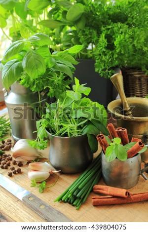 Fresh herbs from garden in the kitchen - stock photo
