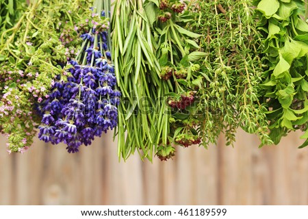 fresh herbs hanging to dry in front of a wooden wall