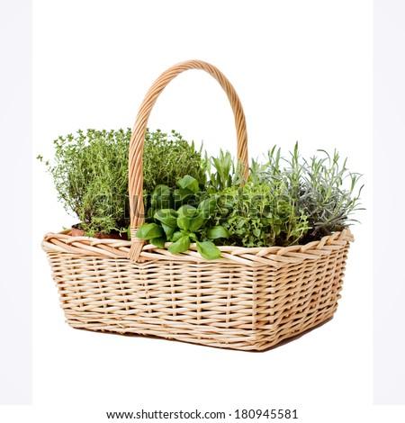 Fresh herbs in hand-basket - stock photo