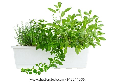 Fresh herbs in planter, thyme, oregano and sage , isolated on white - stock photo