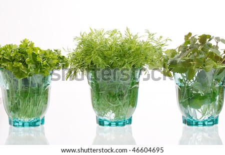fresh herbs in the glass