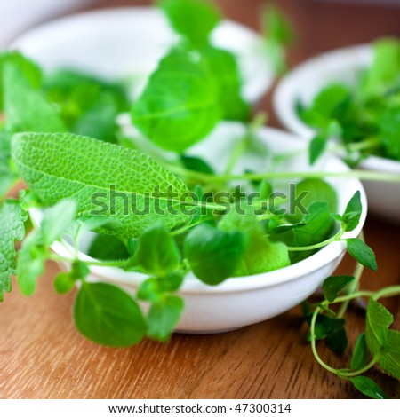 Fresh herbs in white bowls - stock photo
