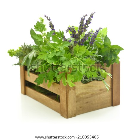 Fresh herbs in wooden box - stock photo