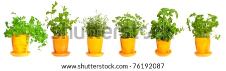 Fresh herbs in yellow pots.  Mint, basil, thyme,  parsley  oregano and coriander - stock photo