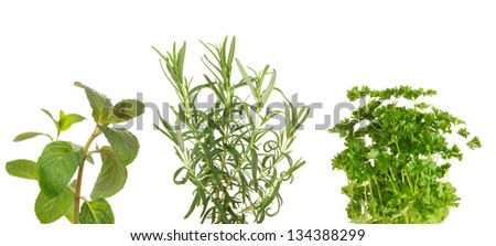 Fresh herbs on white background - stock photo