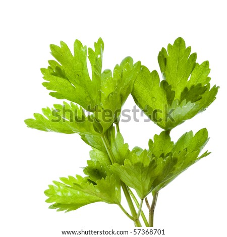 fresh herbs parsley isolated on a white - stock photo