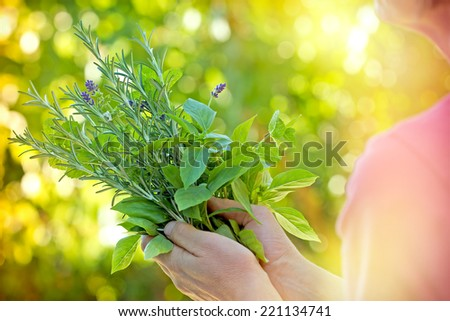 Fresh herbs - spices in woman's hands - stock photo