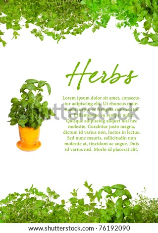 Fresh herbs with sample text. Mint, basil, thyme,  parsley  oregano and coriander - stock photo