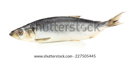 Fresh herring fish isolated on white - stock photo