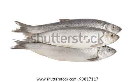 Fresh herring fish isolated on white background - stock photo