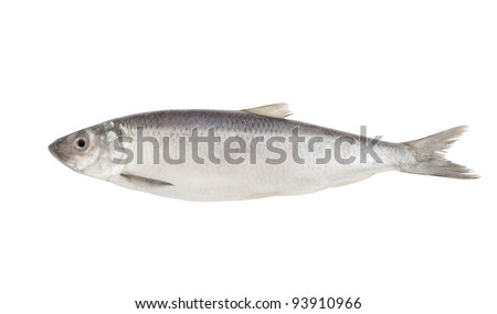 Fresh herring fish isolated on white background