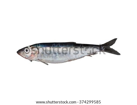 fresh herring on white background - stock photo