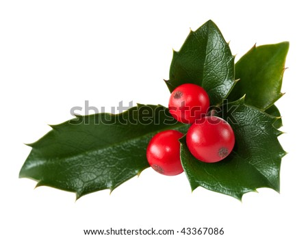 Fresh holly leaves and red berry over white - stock photo