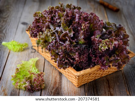 Fresh homegrown purple lettuce in basket on wooden table - stock photo