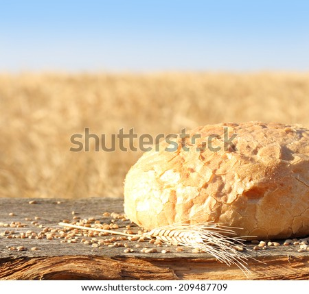 Fresh homemade bread and wheat spike against wheat field. - stock photo