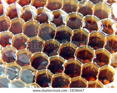 Fresh honey in the comb. Buckwheat honey - stock photo