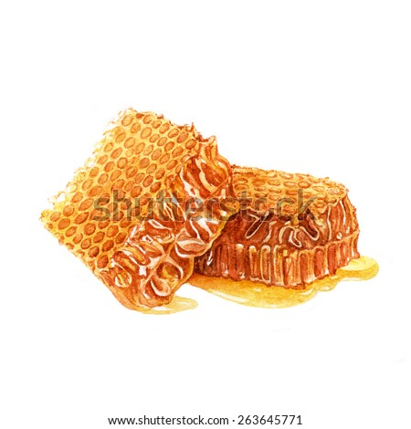 Fresh honey in the comb. Watercolor illustration. - stock photo