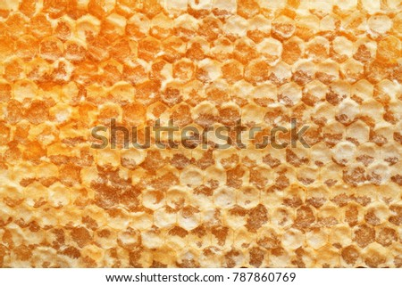 Fresh honeycomb as background, closeup