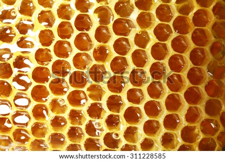 Fresh honeycomb background - stock photo