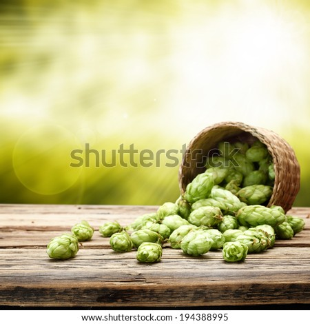 fresh hop and basket on desk  - stock photo