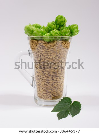 Fresh hops and barley grain isolated on white background. - stock photo