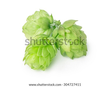 Fresh hops (flowers of  Humulus lupulus) without leaves. Large depth of field,retouched