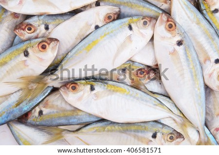 Fresh horse mackerel fish as background - stock photo