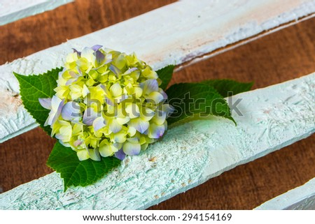 fresh hydrangea flower on wooden boards