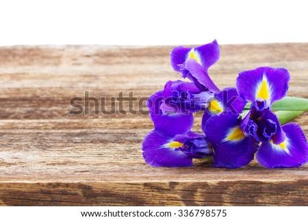 fresh irises on wooden table border isolated on white background - stock photo