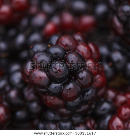 Fresh juicy ripe dewberry close-up - stock photo