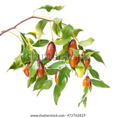 Fresh jujube fruit on branch with leaves isolated on white background