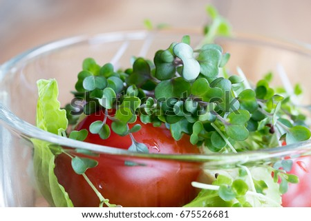 Fresh Kale Microgreens In A Vegetable Salad With Tomato And Lettuce