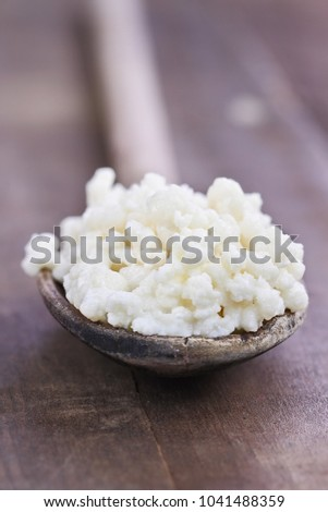 Fresh Kefir grains. Selective focus with extreme shallow depth of field. One of the top health foods available providing powerful probiotics.  It is cultures of yeast and bacteria use to make