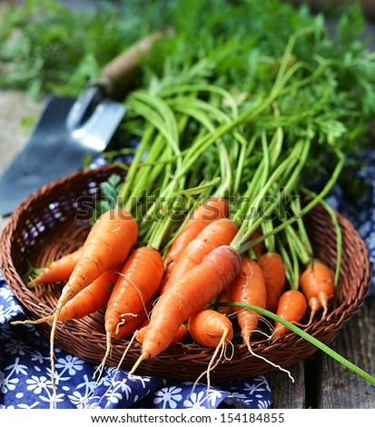 Fresh kitchen garden carrots on the wooden background - stock photo