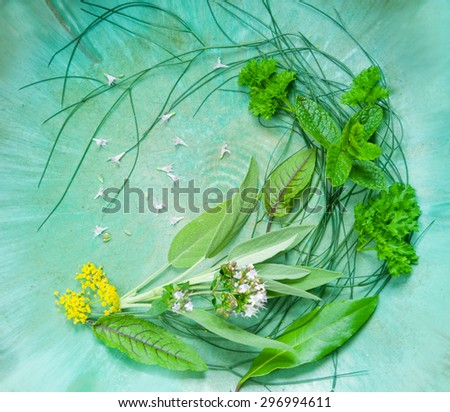 Fresh kitchen herbs composition - stock photo