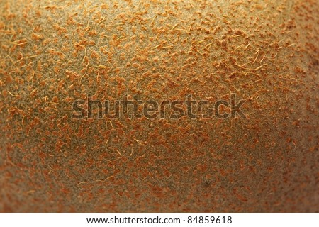 fresh kiwi peel texture, extreme closeup photo - stock photo