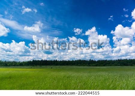 Fresh Landscape Grass Lawn  - stock photo