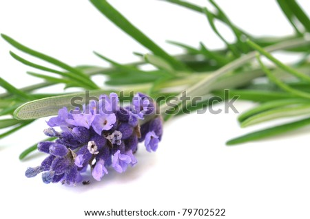 Fresh lavender and rosemary, isolated on white - stock photo
