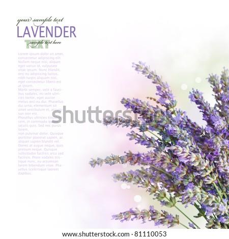 Fresh lavender flower border design over white background with bokeh lights - stock photo