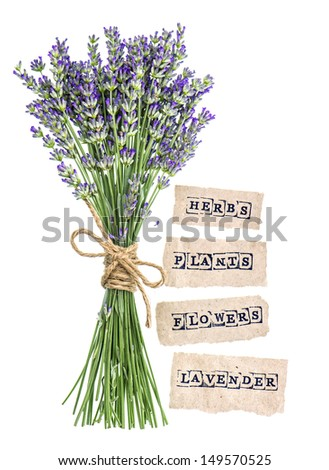 fresh lavender flowers with paper tags isolated on white background - stock photo