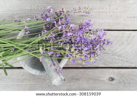 Fresh lavender herbs in marble mortar - alternative medicine, healthy cosmetics concept - stock photo